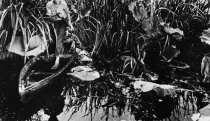 Szenenphoto: LOUISIANA STORY, Vereinigte Staaten von Amerika 1948.  Alle Rechte vorbehalten