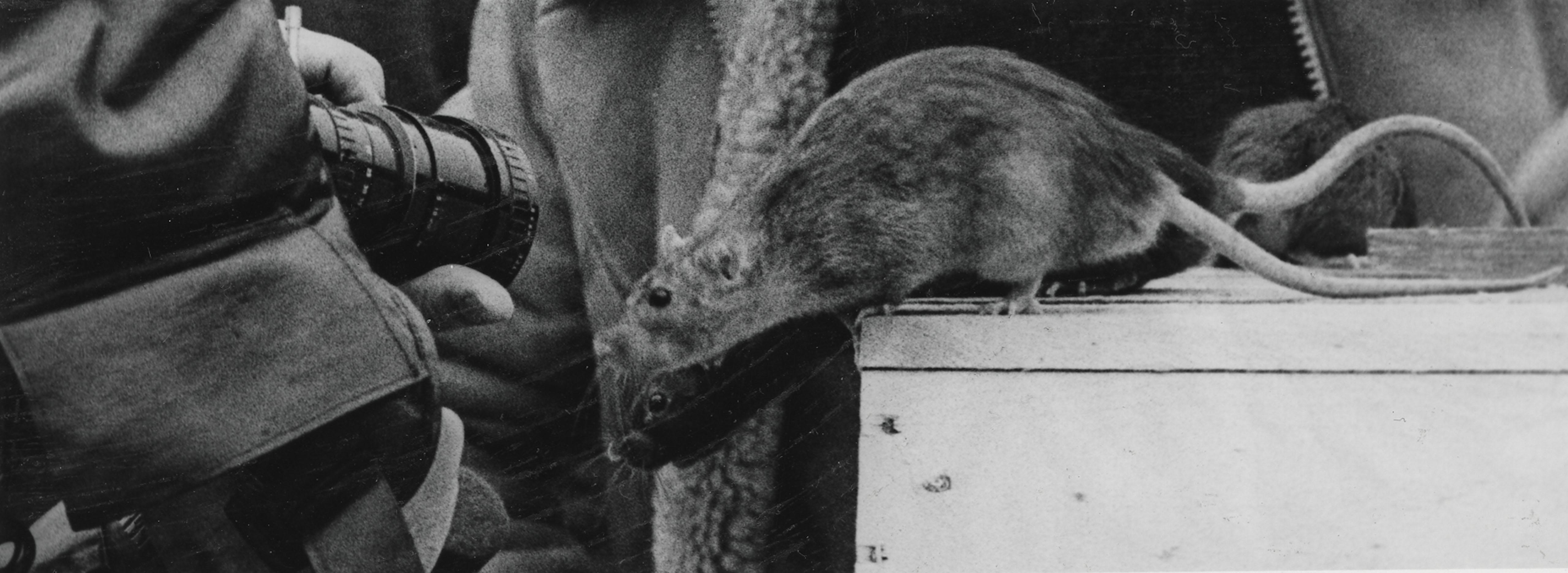 Behind the scenes of the film Nosferatu – Phantom der Nacht