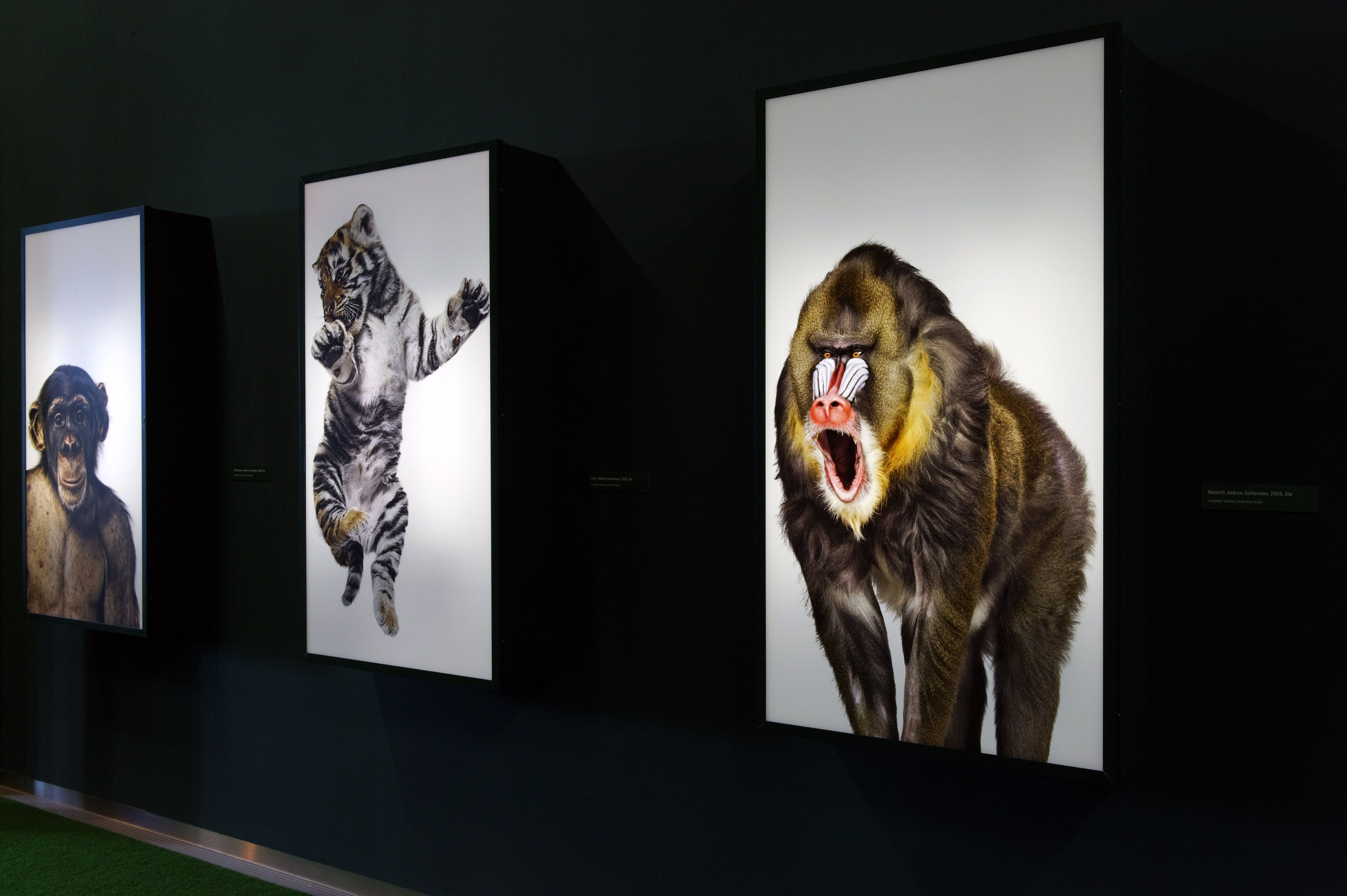 "View of the exhibition ""In the Jungle – An Exhibition for Children"", Deutsche Kinemathek, Berlin"