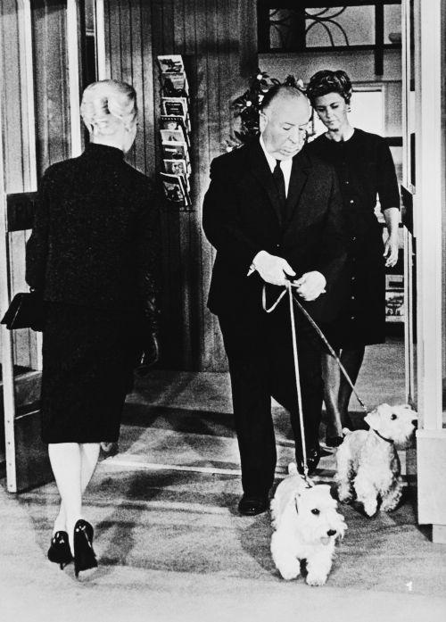 Szenenfoto von dem Film The Birds (USA 1963, Regie Alfred Hitchcock)